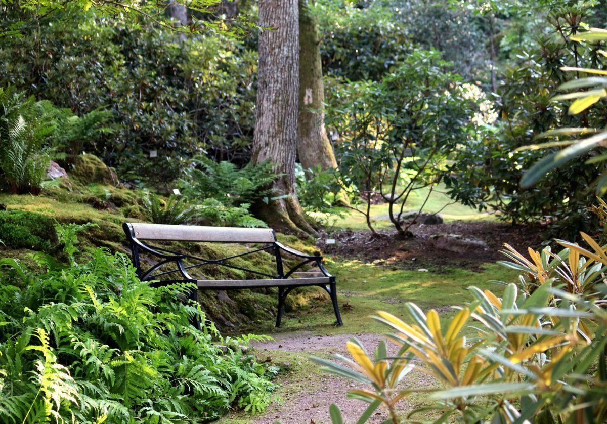 Natalia Lindberg Trädgårdsdesign - Besök till Göteborgs botaniska trädgård woodland sittbänk ormbunkar