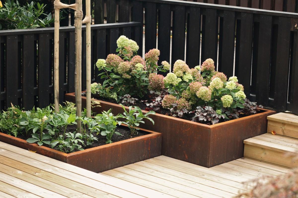 Trädgårdsdesign av en radhusträdgård corten hydrangea hortensia limelight - Natalia Lindberg trädgårdsdesign