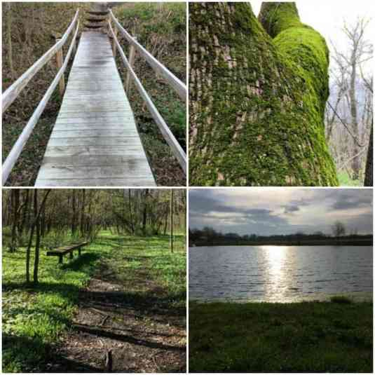 HA Spring Bridge Collage