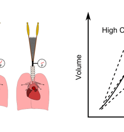 lung compliance [ 1490 x 539 Pixel ]