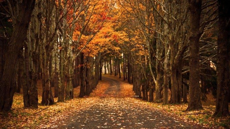 foliage d'autunno doveandiamosulgargano