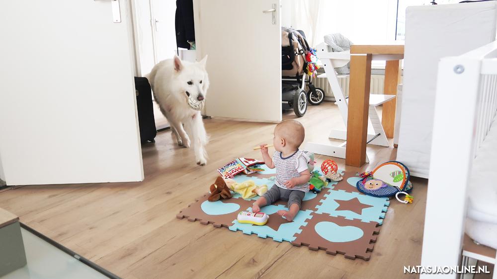Hoe het gaat tussen onze baby en onze hond