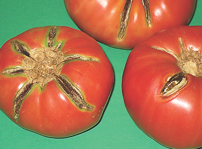 It's time to talk tomatoes