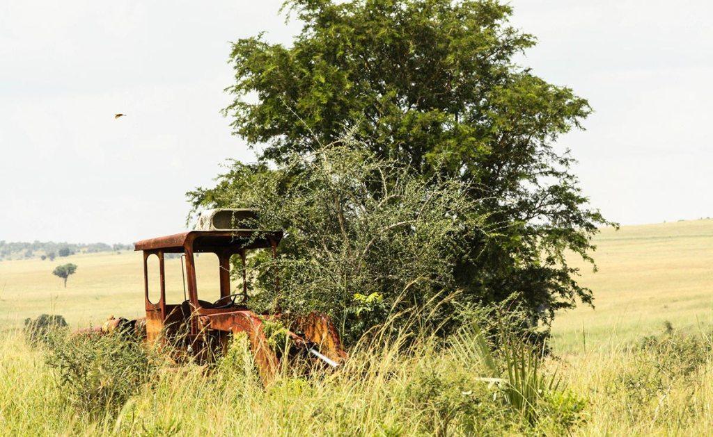 Kidepo Valley wildlife viewing