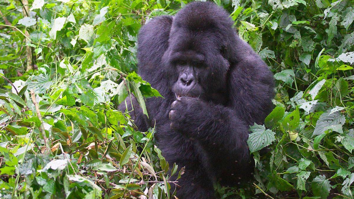 Why Visit Uganda