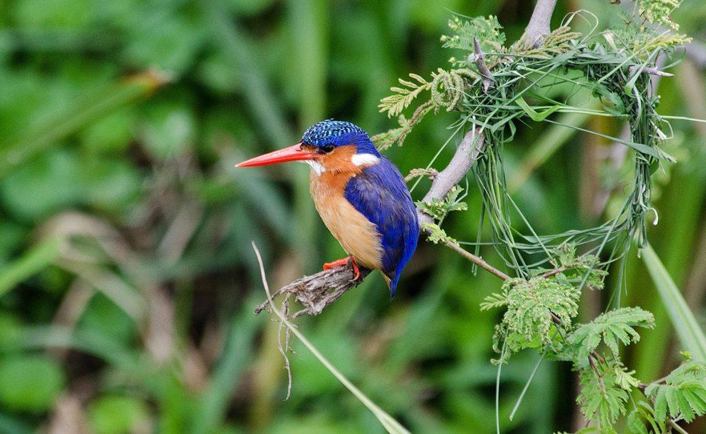 Uganda bird watching tour