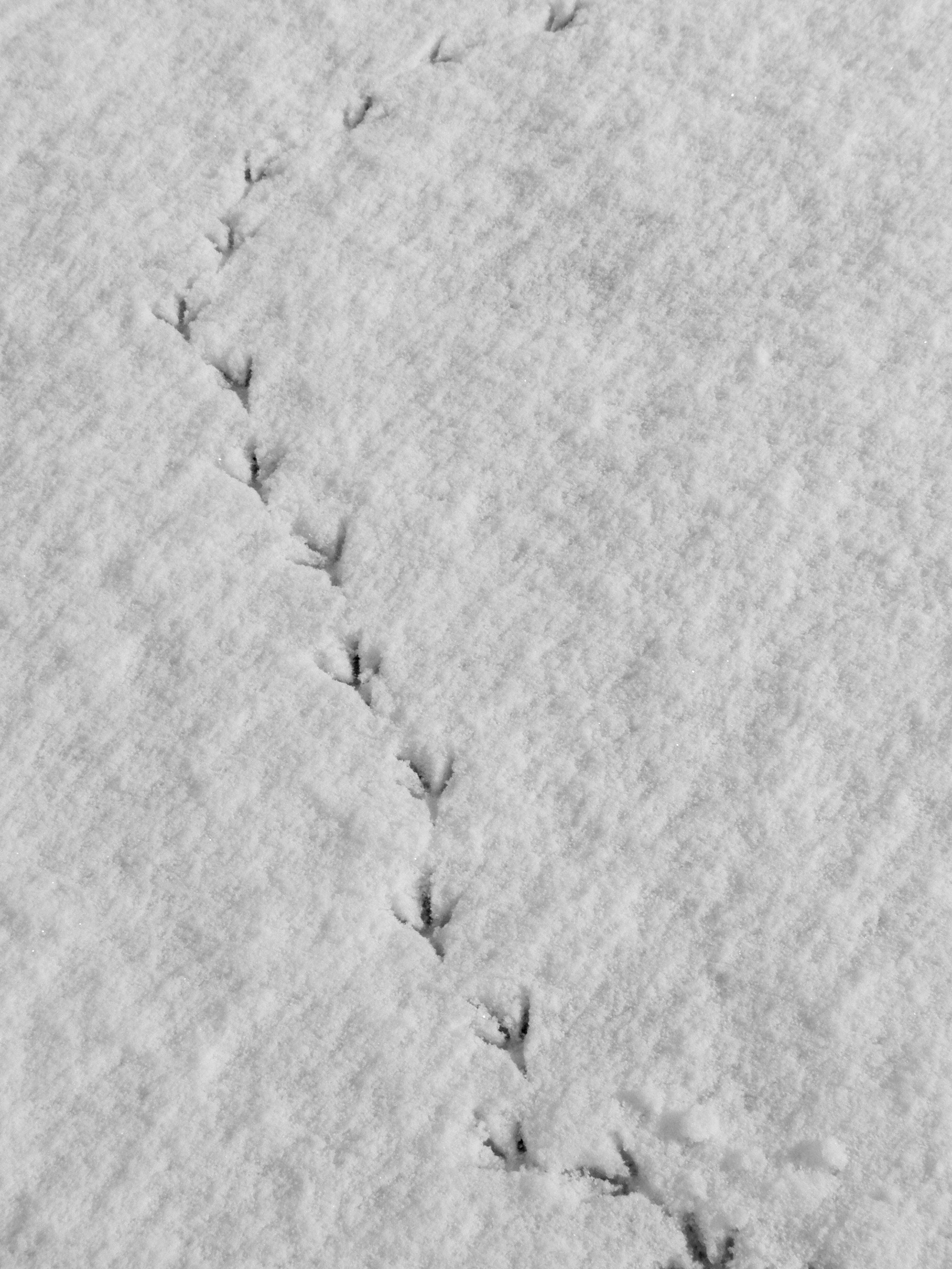snow-bird-footprints