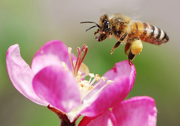 10 Facts About Honey Bees National Geographic Kids