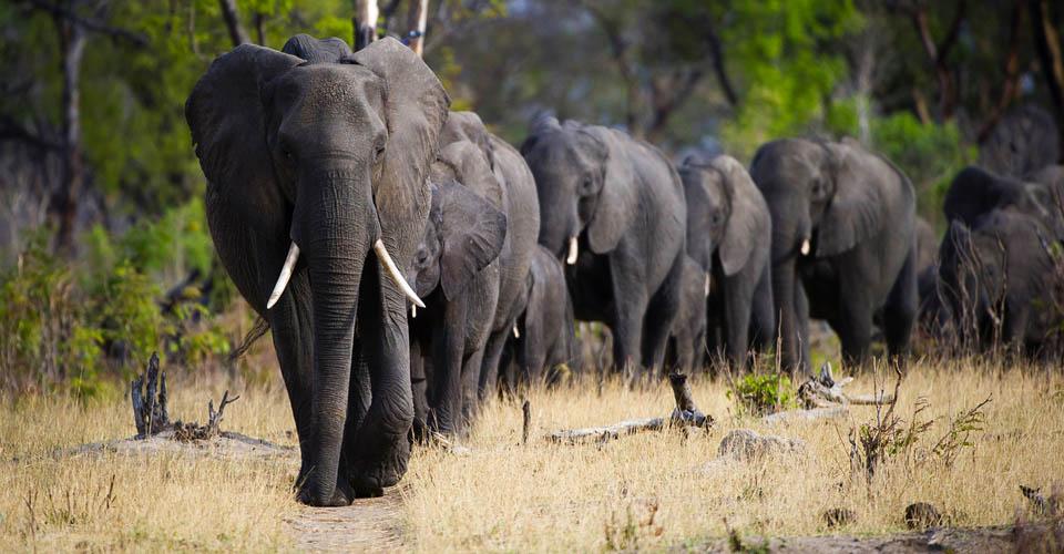 Victoria Falls Live Wallpaper South Africa Safari Africa Natural Habitat Adventures
