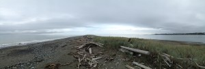 A panorama of Dungeness Spit, form about as far out as we walked.