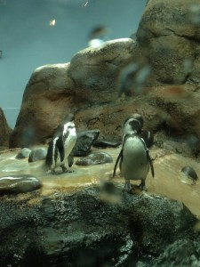 Went to a zoo with friends from church, got to see some penguins. YAY PENGUINS!