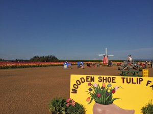 This is what you see imediately upon entering the tulip field area.