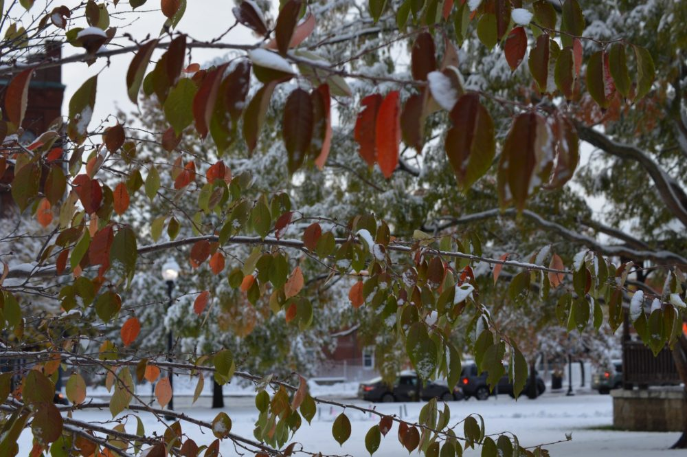 oct red leaves snow