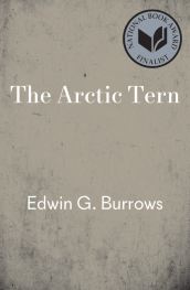 The Arctic Tern by Edwin G. Burrows book cover