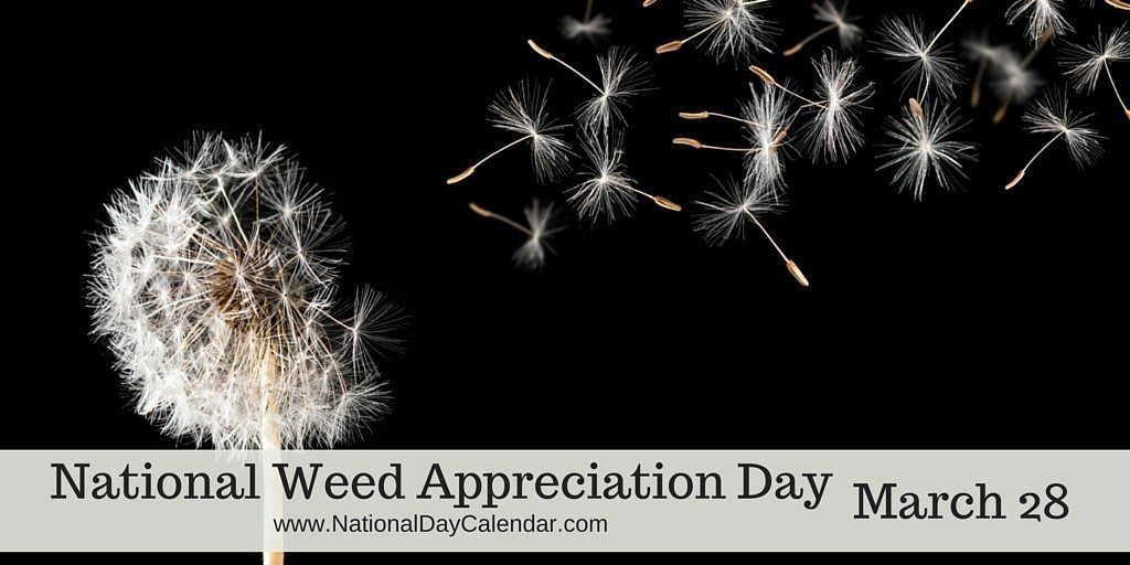 Image result for Weed Appreciation Day 28th March