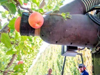 roughly 10% of America's illegal immigrants work in America's agricultural sector, usually picking fruits and nuts. automation could put an end for demand for illegal labor