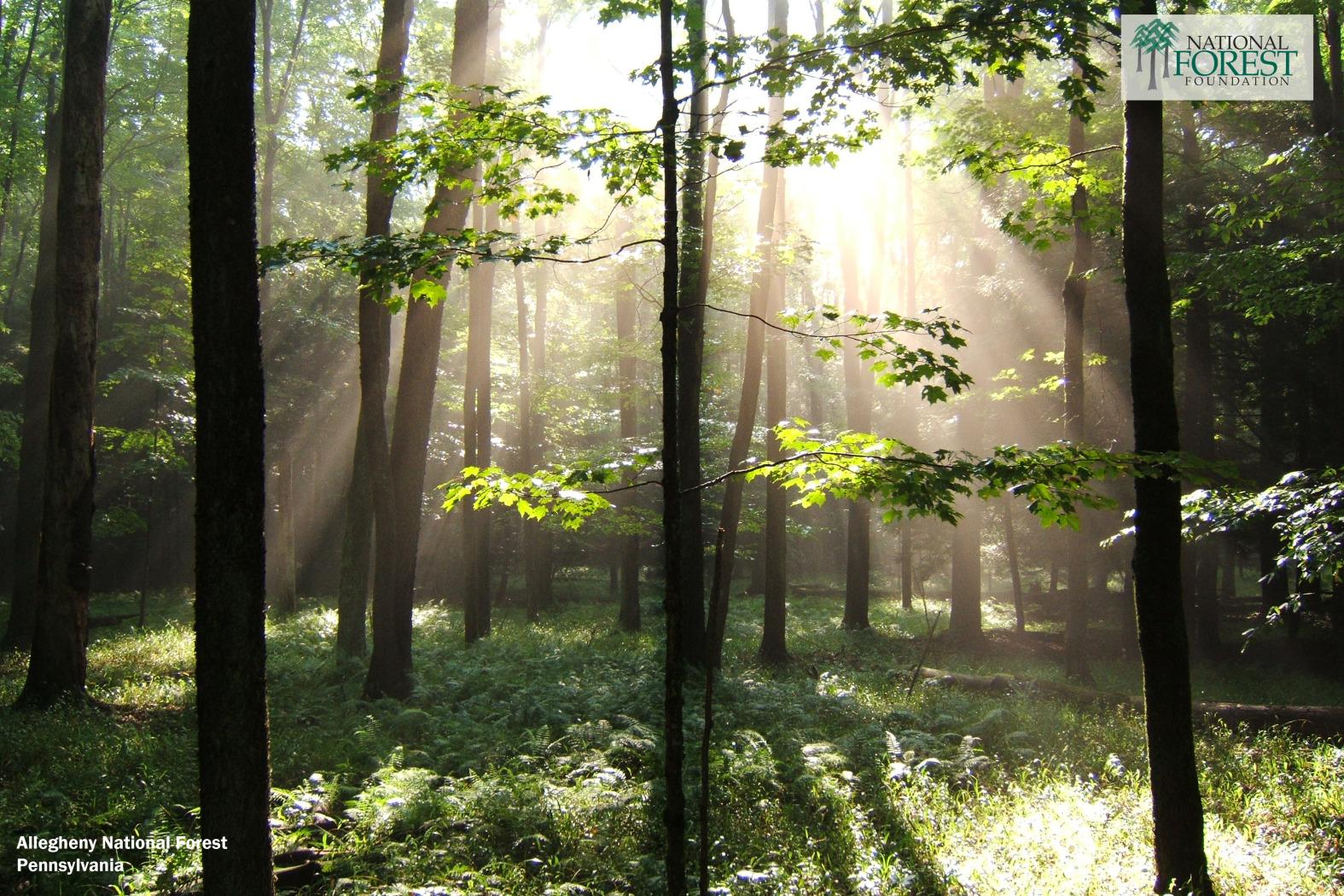 desktop backgrounds national forest