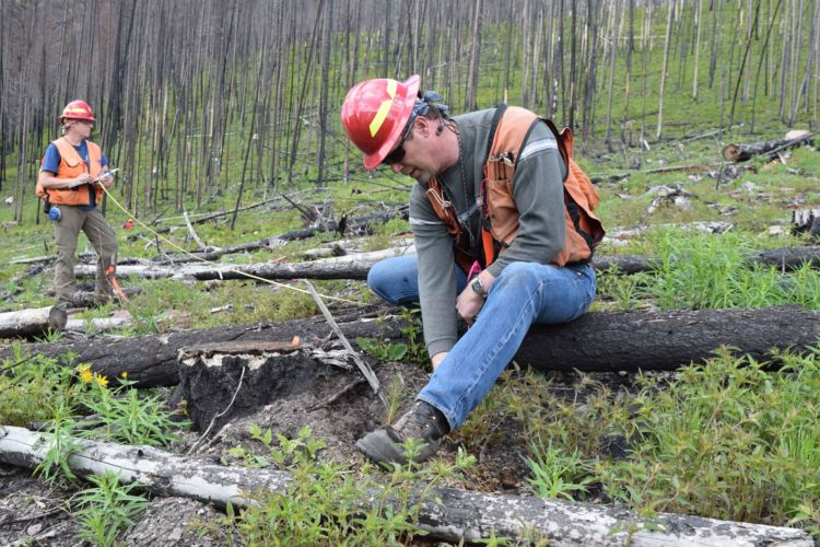 National Forest Foundation | Quinault Division of Natural Resources