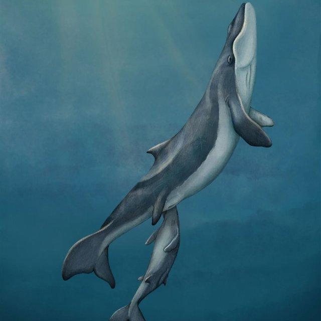 Una ballena sin dientes ni barbas