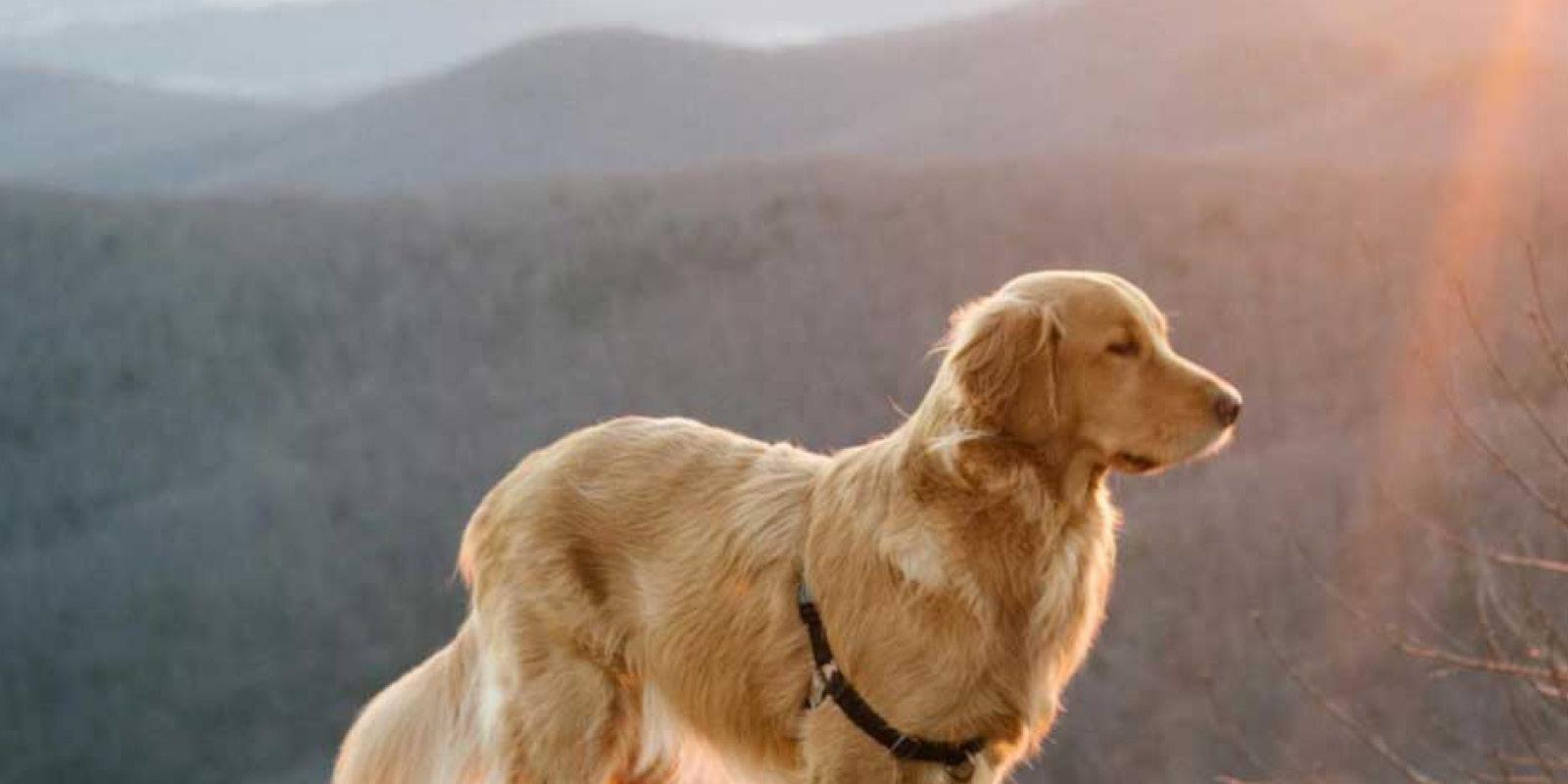 6 most dog friendly national parks shenandoah national park