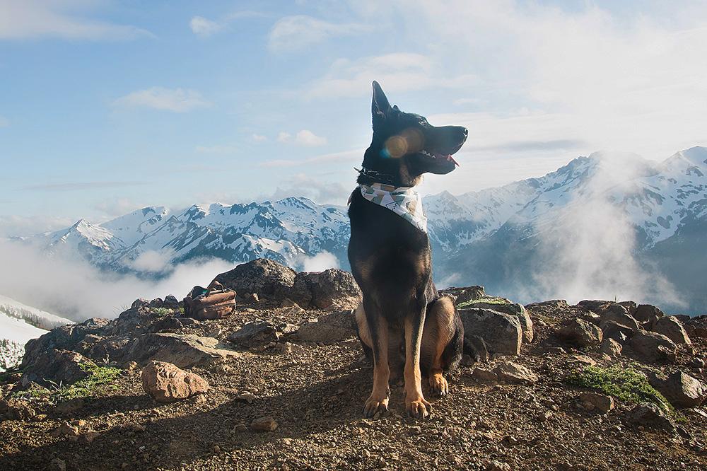 national park paws guest author miloshepski