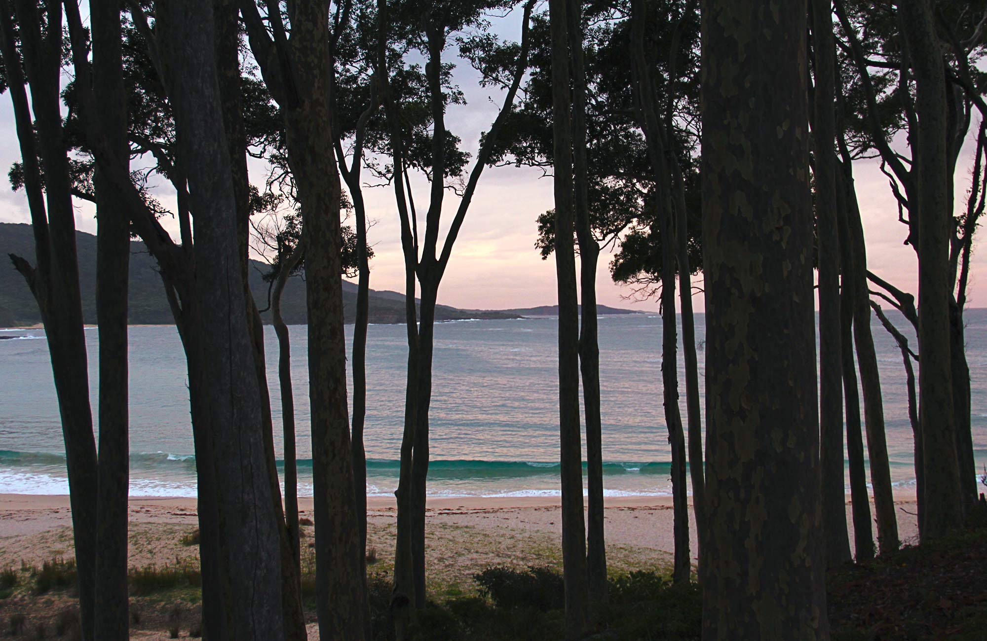 Depot Beach campground  NSW National Parks