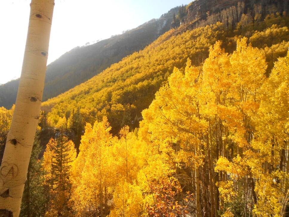Aspen at White River National Forest  National Parks Blog