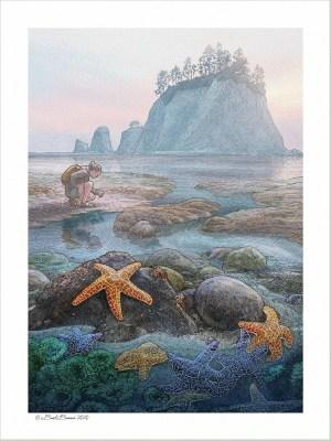 Coastal Tidepool