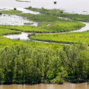 Florida Bill to Ban 'Nature Rights' | National Review