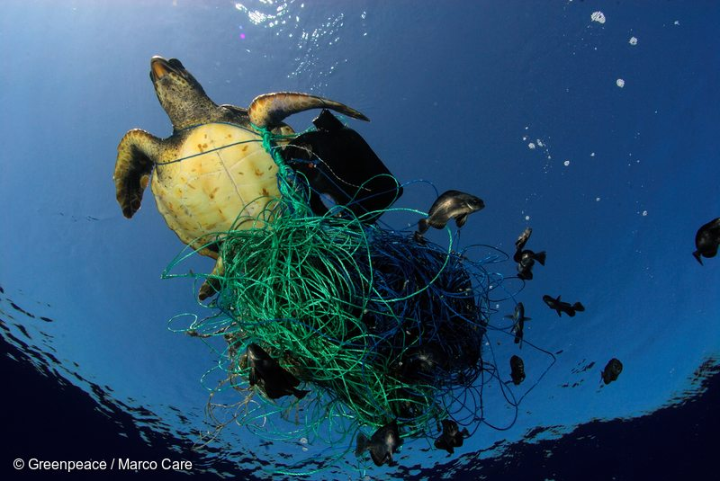Stop polluting or there will be more plastic than fish in for More fish in the sea