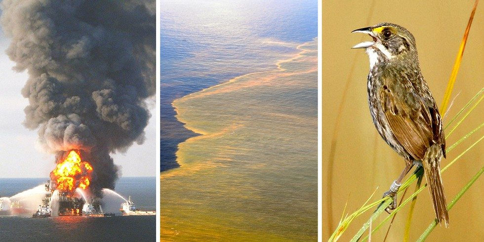 Oil from BP spill has officially entered the food chain - NationofChange