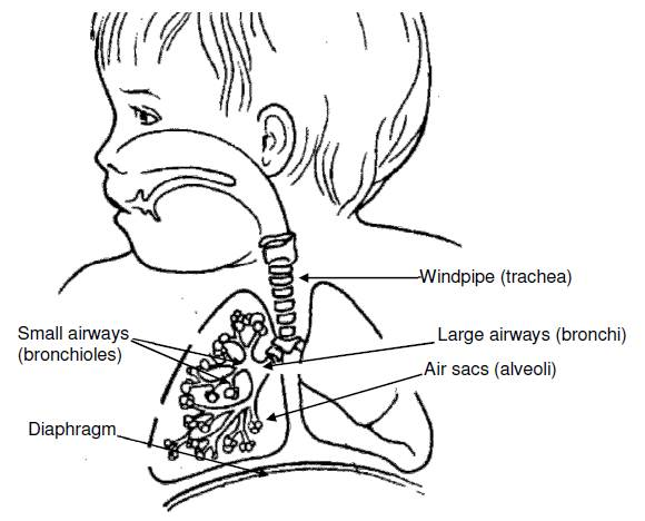 Body System: Respiratory :: Nationwide Children's Hospital