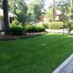 Nice Green Fertilized Lawn