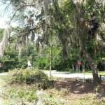 Lawn Debris Removal Savannah Georgia