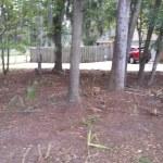 Overgrown Lot Clearing Savannah Georgia