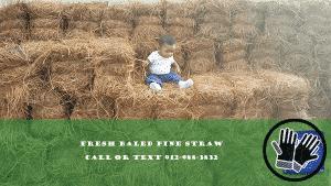 fresh-baled-pine-straw