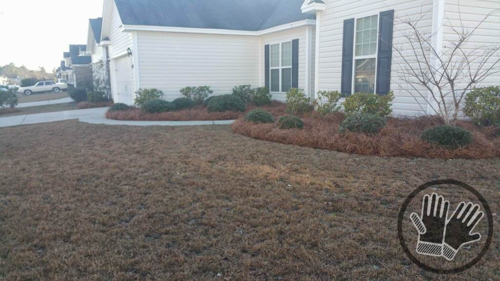 Long Needle Pine Straw Installation Pooler Georgia