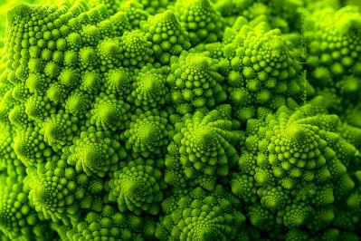 piante-geometriche-in-natura-15