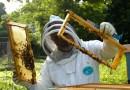 Il fantastico mondo delle api.