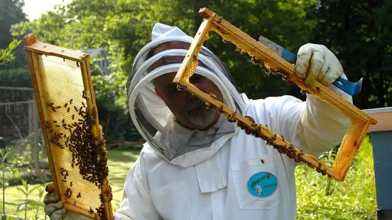 Le api muoiono di fame. Gli apicoltori lanciano l'allarme