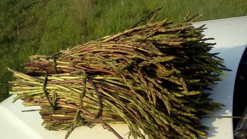 Ad Isnello, nel palermitano, la sagra delle erbe spontanee o selvatiche