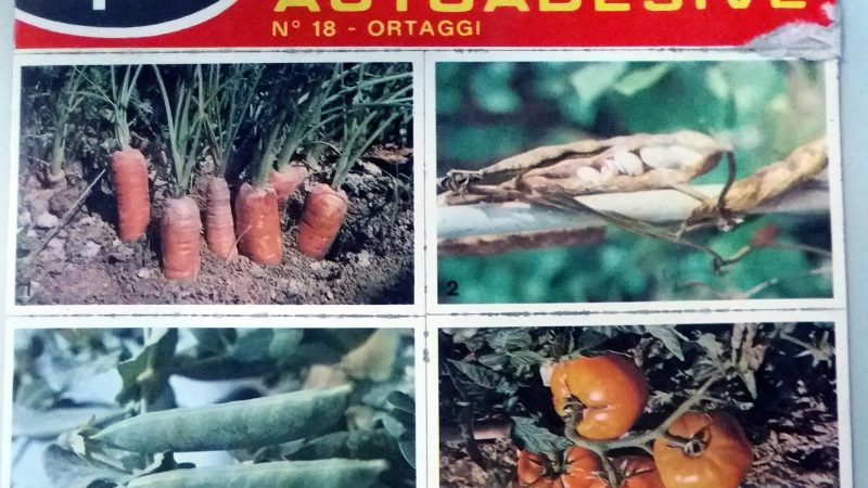 Gli ortaggi in una scheda SAPERE degli anni 70