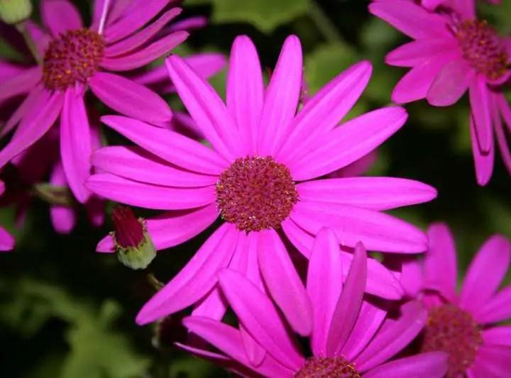 Piante fiorite: rinvaso e concimazione