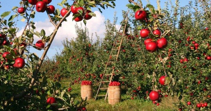 6 Beneficios de consumir verduras y frutas para tu salud