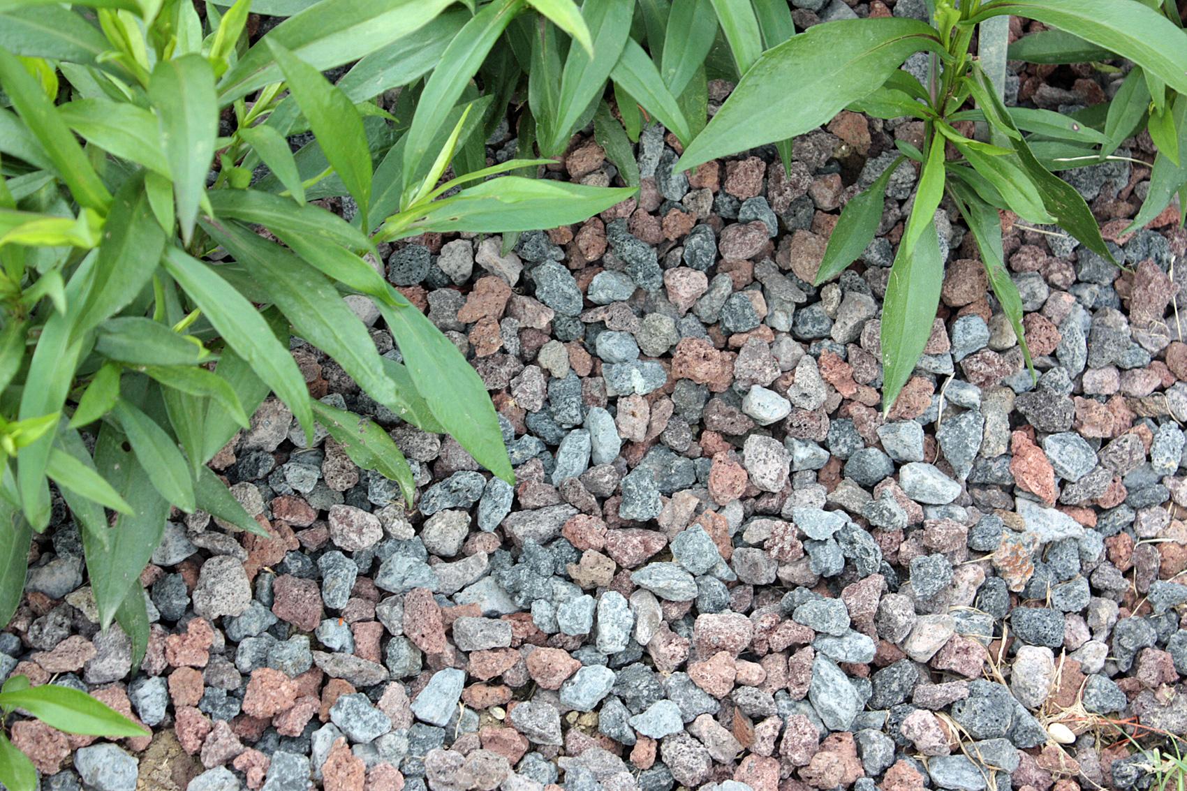 Ob Bodendeckerpflanzen Rindenmulch oder Kiesbeet anlegen  Native Plants