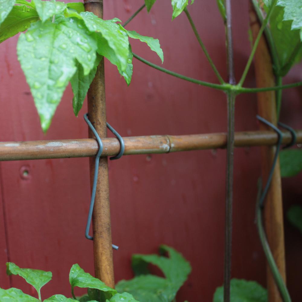 Bambusklammern  Tonkinklammern  Rankgitter selber bauen  Native Plants