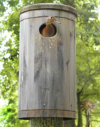 Wood Duck Nest Box Dimensions