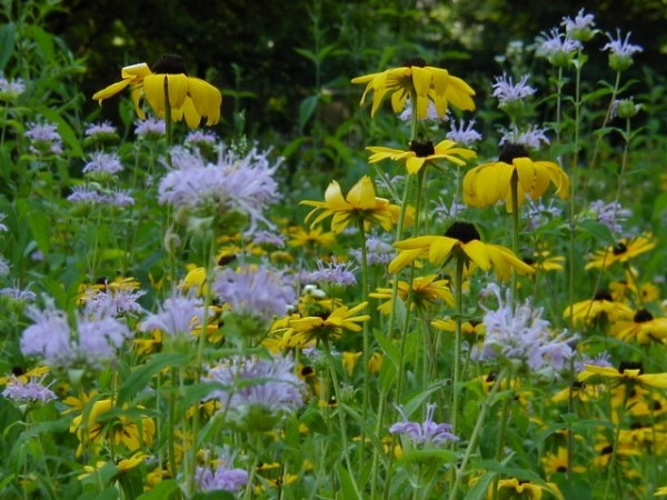 swmpc native plant landscaping