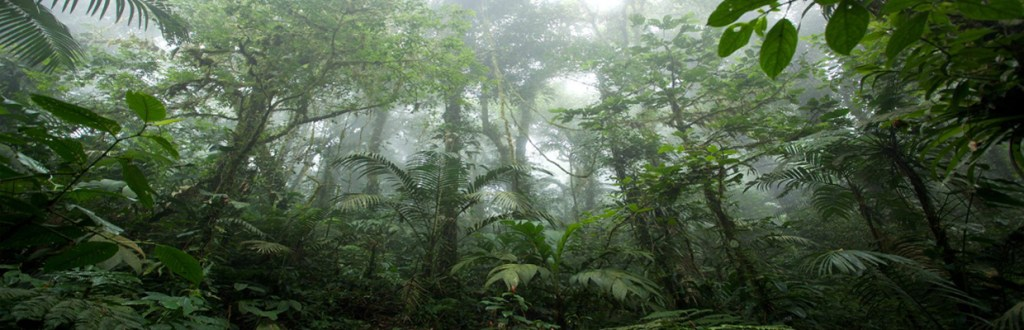 Colombie : la culture du café de spécialité en agroforesterie