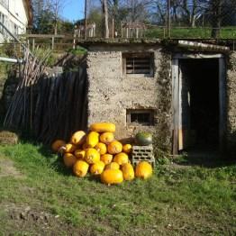 Quite the pumpkin haul